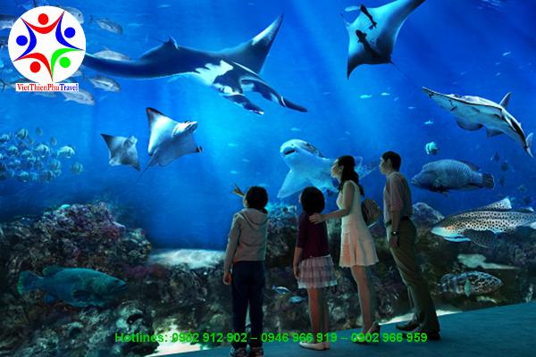 thuy-cung-aquaria-malaysia